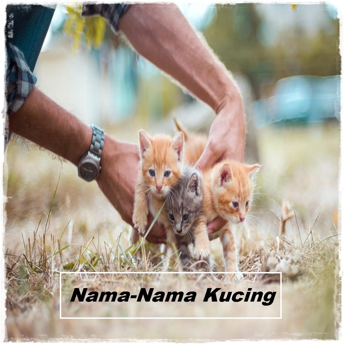 Nama-Nama Kucing