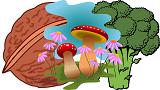 Walnut Mushroom Broccoli combination is heathy