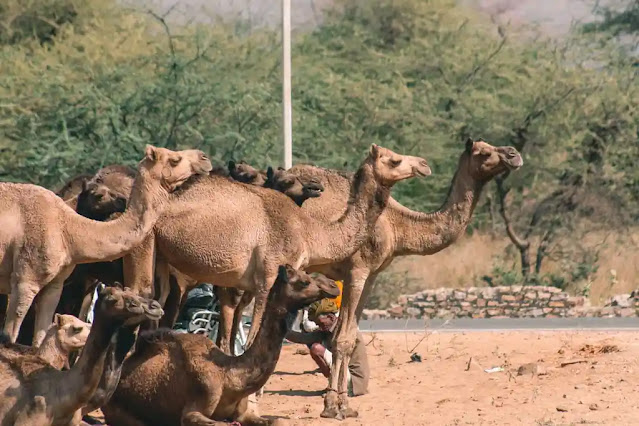 Top 10 Places of Tourism in Rajasthan