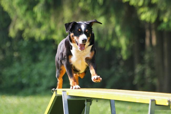 Szkolenie psa klikerem