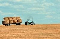 I campi coltivati non sono cruelty free