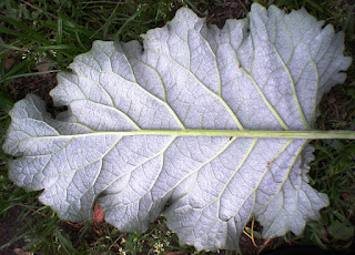 Underside leaf texture showing self-similar fractal patterns