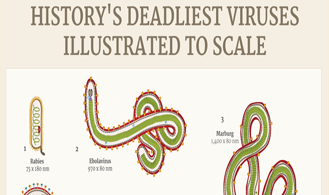 History's Deadliest Viruses Illustrated to Scale