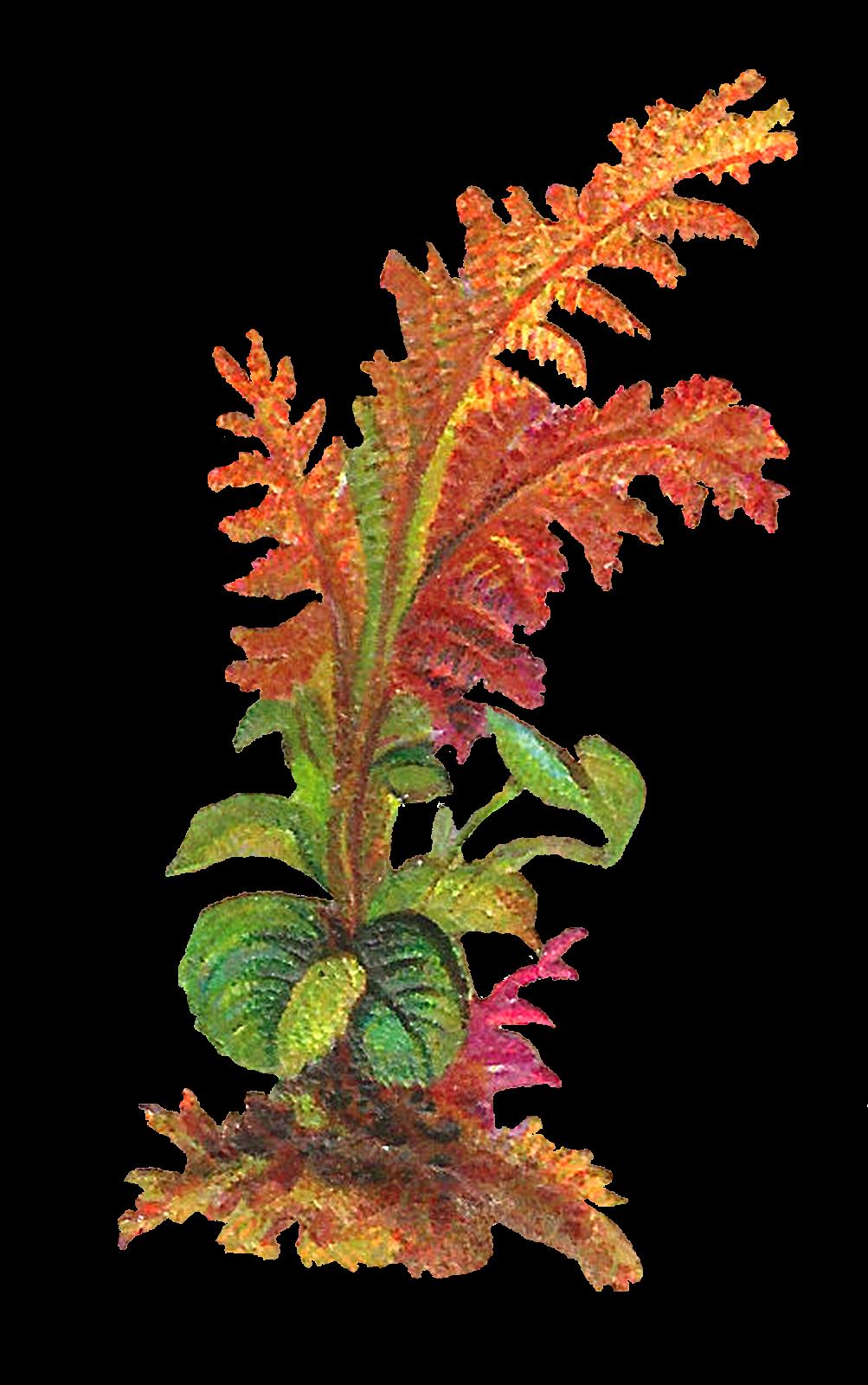 Flower Leaves Clipart