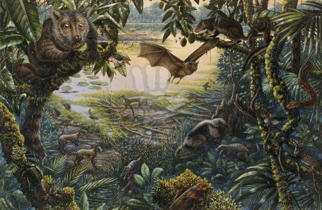 Pleistocene Fossil Pollen Staten Island
