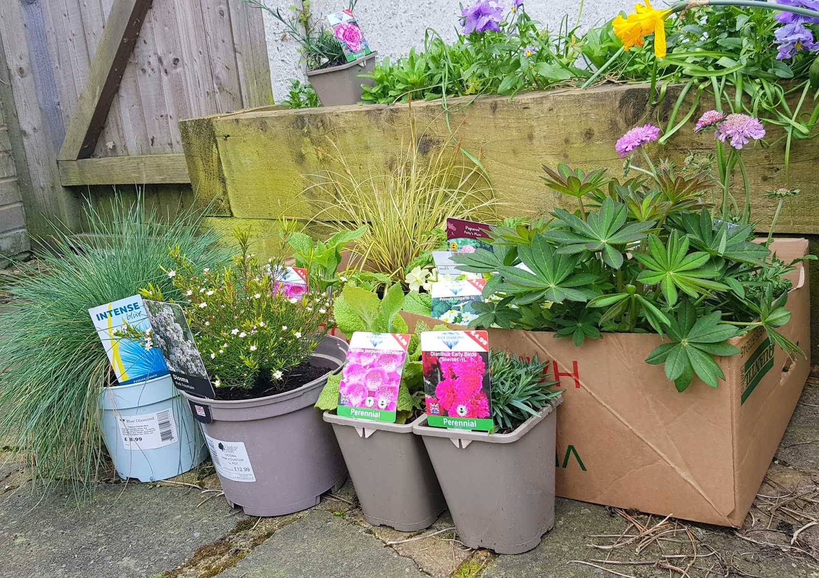 Selection of perennial plants bought just before the lock down started in London, UK, March 2020