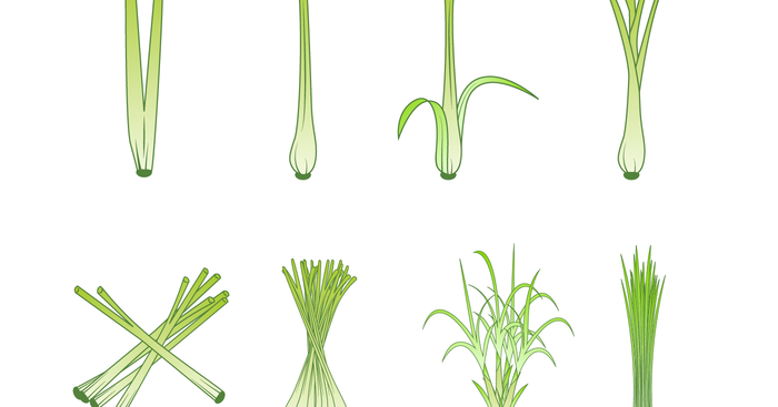 Tips On How To Grow Your Own Lemongrass