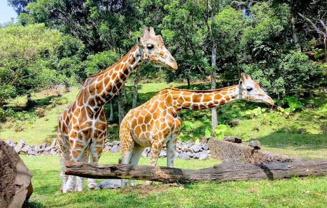 3. Taman Safari Prigen