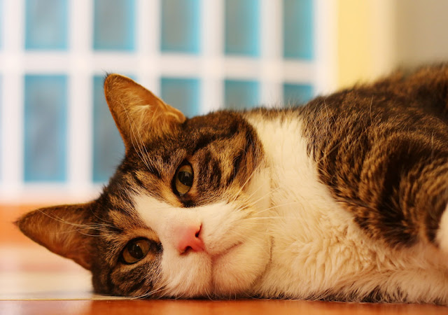 International Cat Care wants to improve people's understanding of cats' mental health