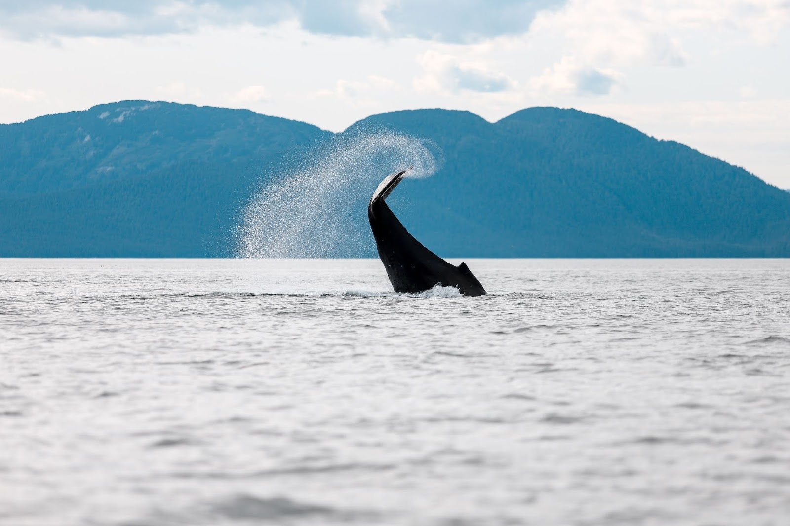 Whale Watching in Hoonah