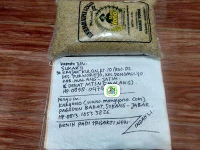 Benih padi yang dibeli SUKARJI Malang, Jatim. (Sebelum packing karung ).