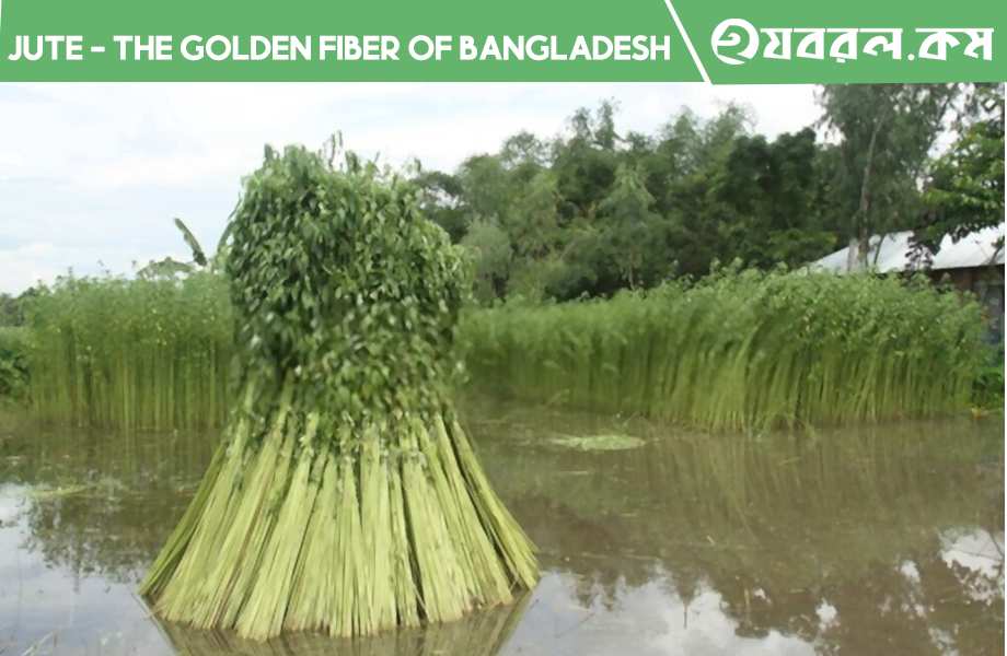 Essay or Composition about Jute - The Golden Fiber of Bangladesh