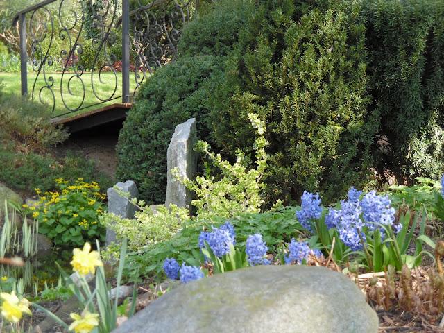 cis w ogrodzie