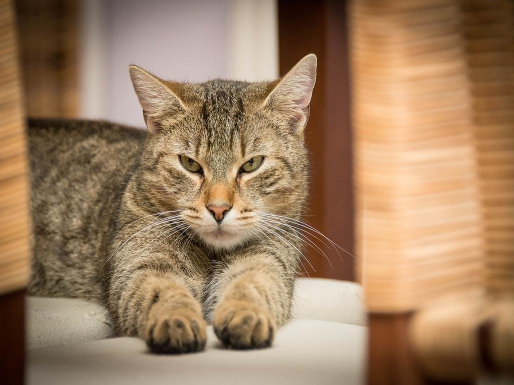 Wallpaper Gallery 140 Cute Cat Images Cat Wallpaper Free Download Hd 06
