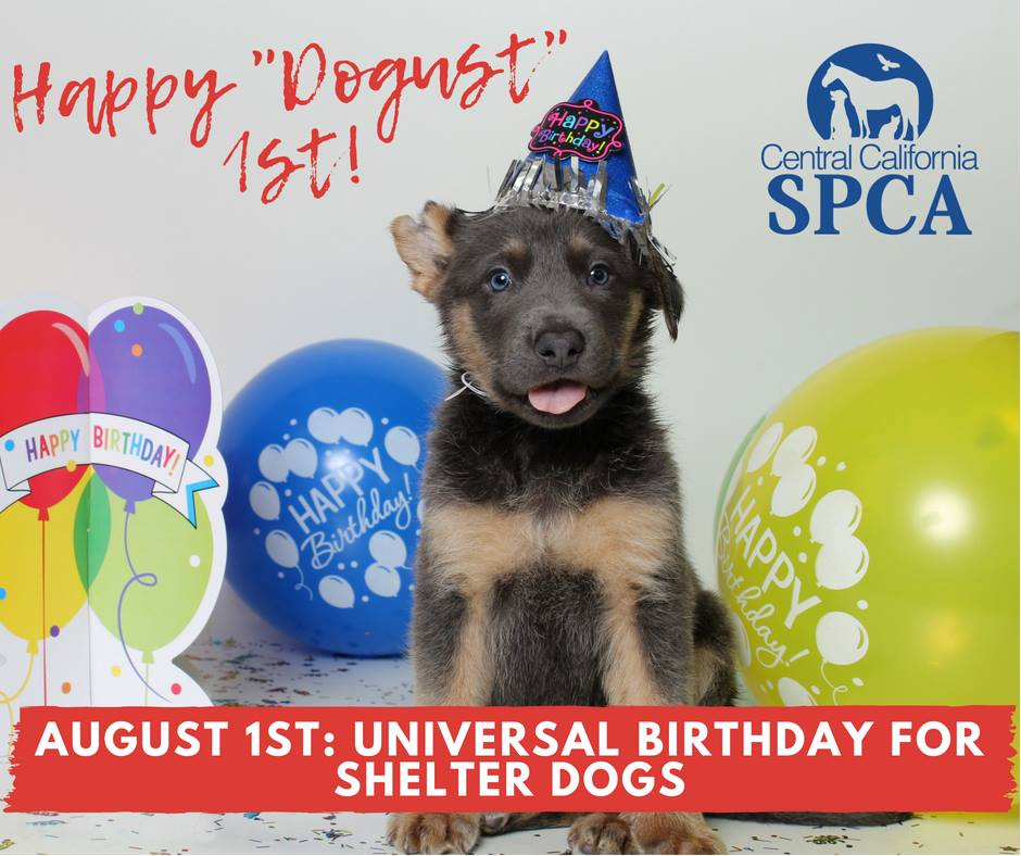 DOGust 1st Universal Birthday for Shelter Dogs