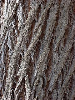 Texturas naturaleza