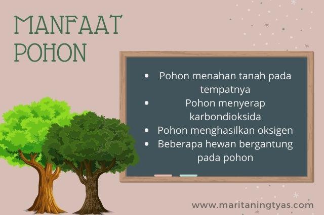 4 manfaat pohon bagi manusia