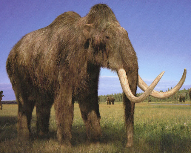 Last Woolly Mammoths 'Died of Thirst'