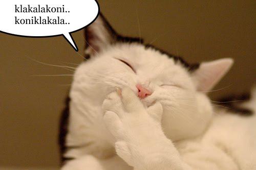 Workshop girl Nak hilangkan stressJom layan kucing buat