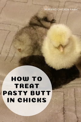How to treat pasty butt in chicks.