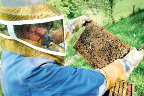 Due To The Profound Interests In Backyard Beekeeping, Join Beginner  Apiarian Lorraine Glowczak, As She Shares Her Discoveries On Her New  Adventure Of ...