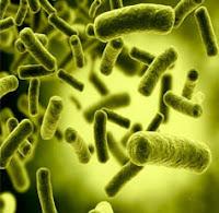 Bakteri Autotrof