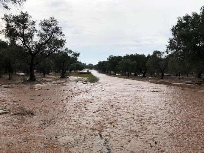 Maltempo, Coldiretti: pioggia salva la raccolta da siccità