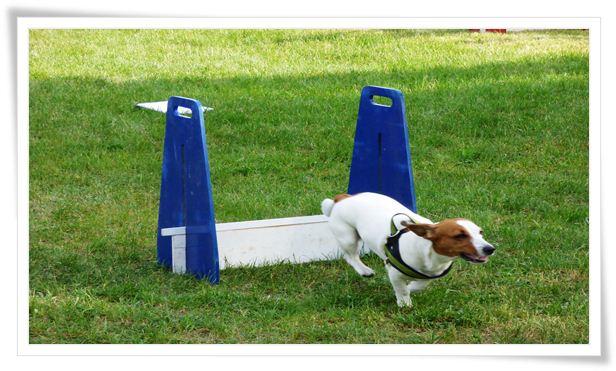 Dog Training – Exercises