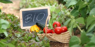 Peluang bisnis makanan organik di medan