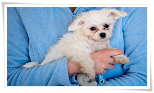 puppy training,dog training,puppy training schedule,puppy training 101,puppy training tips,puppy training basics,puppy training videos,puppy training first week,puppy potty training,potty training puppy,potty training a puppy,how to train a puppy,training,stop puppy biting,puppy,training a puppy,puppy training guide,puppy house training,house training a puppy,puppy training first day,potty training puppy easy,puppy potty training tips
