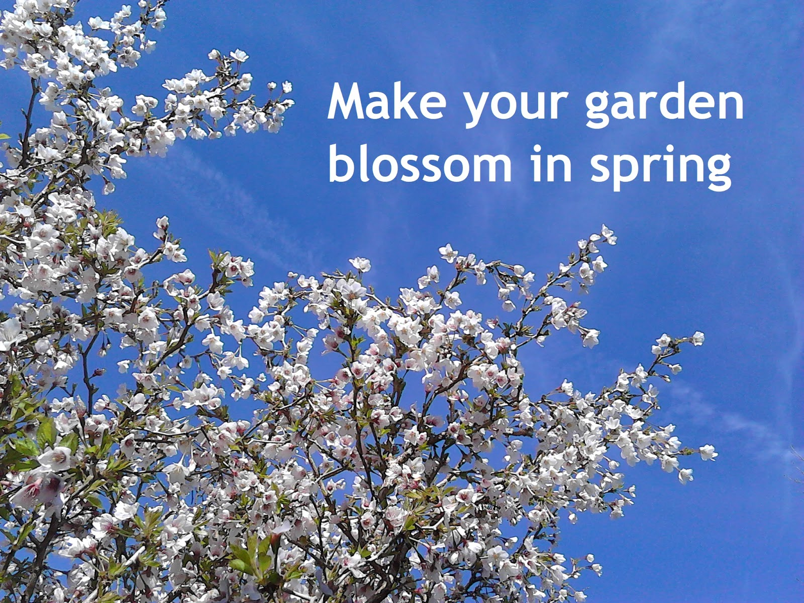 The green fingered blog what tree should i plant for spring blossom in my garden for What should i plant in my garden