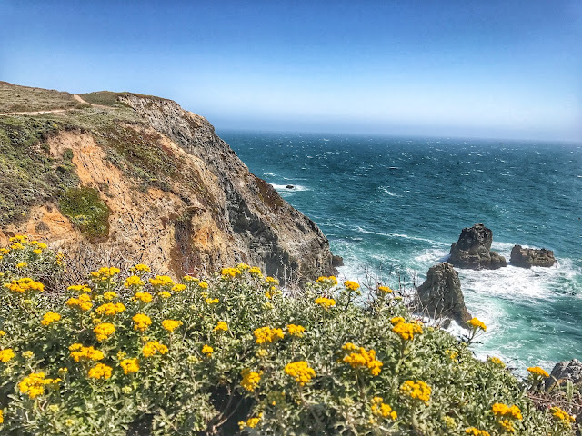 Flowers on Bodega Bay Trail
