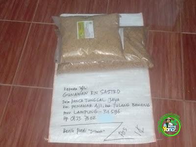 Benih pesanan  GUNAWAN BIN SASTRO Tulang Bawang, Lampung  (Sebelum Packing)