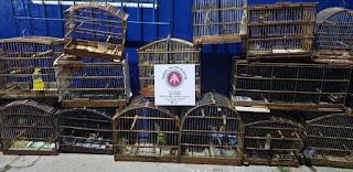 Polícia resgata pássaros silvestres em residência na Chapada Diamantina