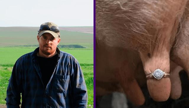Австралийский фермер сделал «самое отвратительное» предложение руки и сердца