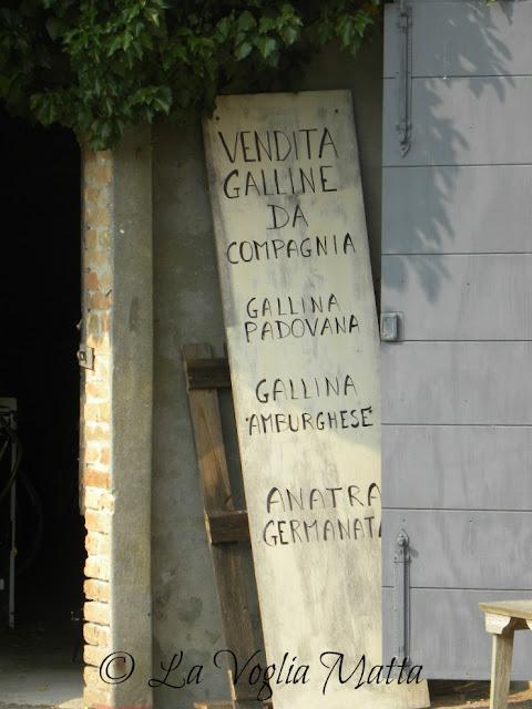 """Isola di sant'Erasmo, cantina """"ORTO""""di Venezia"""