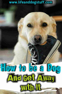 How to Be a Dog and Get Away With It