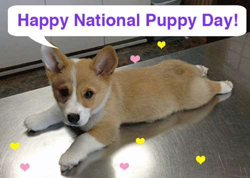 National Puppy Day Wishes Pics