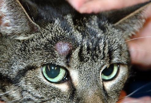Kucingku Duniaku Kucing Dan Masalah Kulit