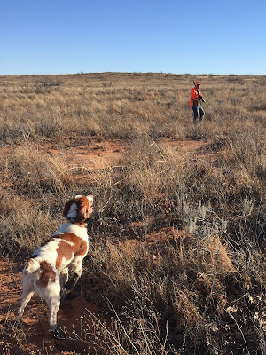bird dogs and bird hunting