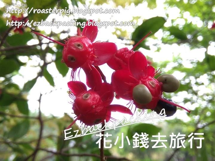 香港米奇老鼠樹