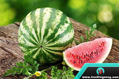 How to Grow Watermelon Nursery, Planting, Fertilization, Maintenance and Harvesting