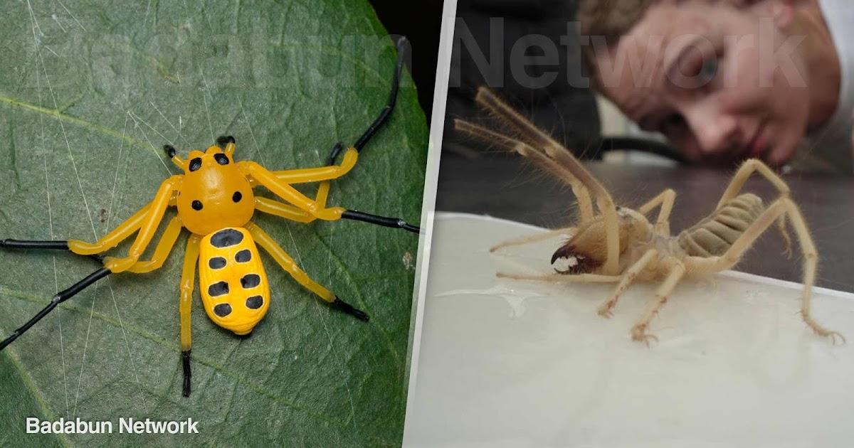 arañas insectos extraños mundos veneno peligrosas