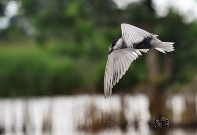 foto burung terbang