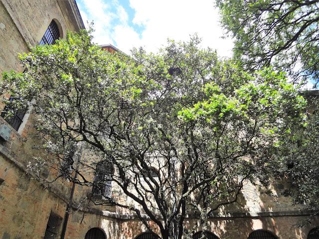 コロンビア国立博物館の中庭