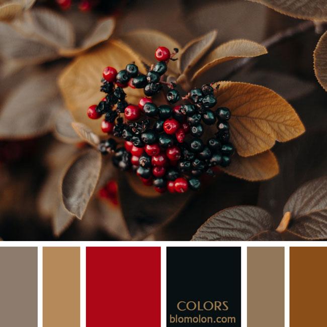 variedad_en_color_paletas_de_colores_72