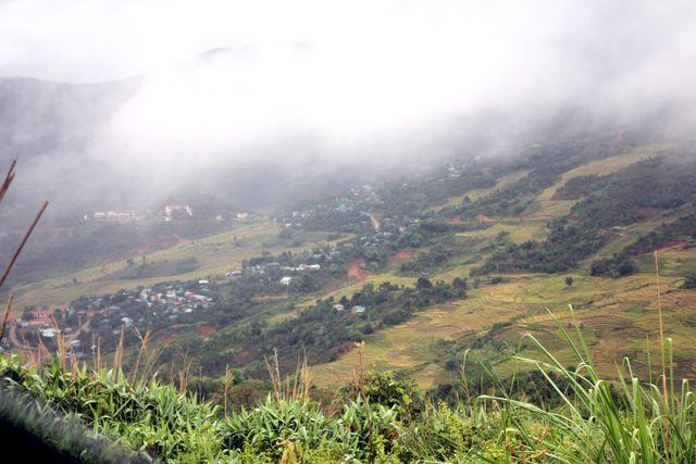 "Golden rice season on the ""foggy country"" Mang Ri"