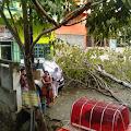 Pohon Tumbang Nyaris Menimpa Mobil di Jalan Lembu Sengkang