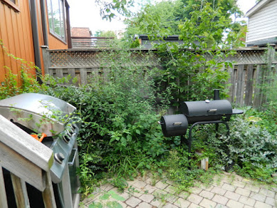 Playter Estates Toronto backyard cleanup before by Paul Jung Gardening Services