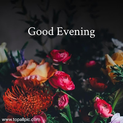 good evening images with flowers for whatsapp